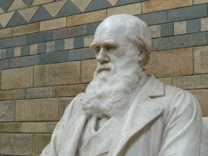 darwin im business